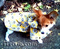 my raincoat